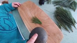 Eastern White Pine (Pinus strobus) needles